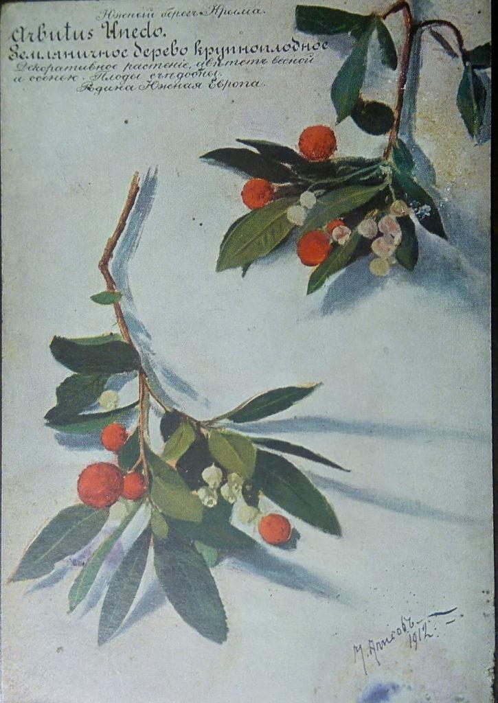 Алисов М. А. Земляничное дерево