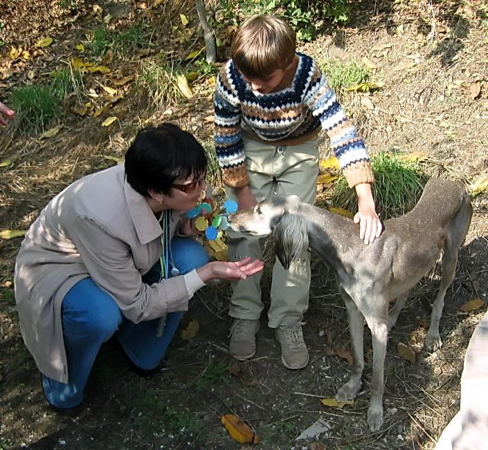 Крымские породы собак